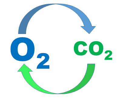 Кислород и углекислый газ