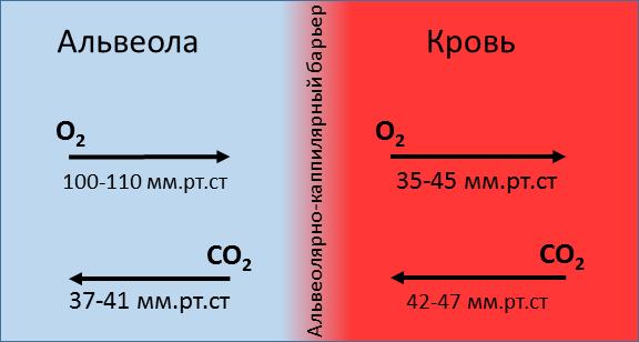 Диффузия газов в крови